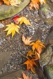 De veranderingskleur van de herfstbladeren Royalty-vrije Stock Foto's