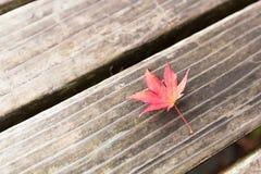 De veranderingskleur van de herfstbladeren in de winter Royalty-vrije Stock Afbeelding