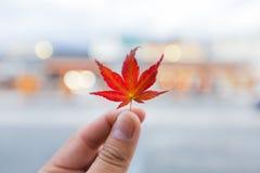 De veranderingskleur van de herfstbladeren in de winter Royalty-vrije Stock Afbeeldingen
