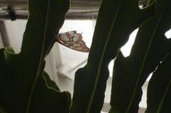 De verbazende en mooie vlinder royalty-vrije stock afbeeldingen