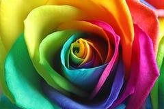 De verbazende regenboog nam bloem toe royalty-vrije stock foto