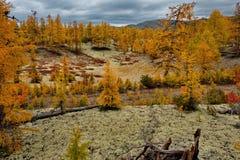 De verbazende schoonheid van de herfst van het Verre Oosten Royalty-vrije Stock Foto
