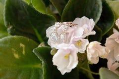 De verbinding op de bloem Royalty-vrije Stock Afbeelding