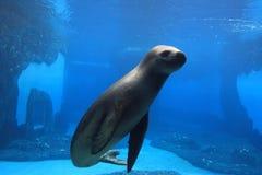De verbinding toont bij de dierentuin. Stock Foto