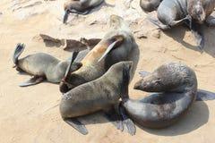 De verbinding van de babymoeder het drinken, Kaapkruis, Namibië Stock Afbeelding