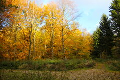 De verde al bosque amarillo fotografía de archivo