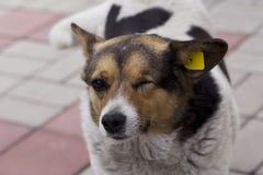 De verdwaalde hond royalty-vrije stock foto's