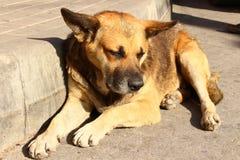 De verdwaalde hond ligt Royalty-vrije Stock Foto