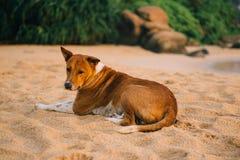 De verdwaalde hond ligt op tropisch strand, omhoog sluit stock foto's