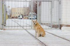 De verdwaalde honden op straat maakt vrees Stock Afbeeldingen