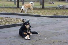 De verdwaalde honden op straat maakt vreesmensen Royalty-vrije Stock Fotografie