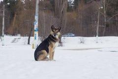 De verdwaalde honden op straat zien eruit Stock Fotografie