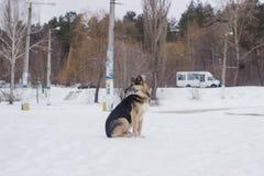De verdwaalde honden op straat zien eruit Royalty-vrije Stock Fotografie