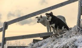 De verdwaalde hondwinter in de sneeuw De sneeuw valt Stock Foto's