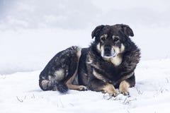 De verdwaalde hondwinter in de sneeuw De sneeuw valt Stock Afbeelding