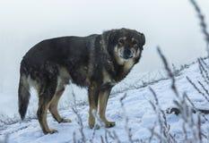 De verdwaalde hondwinter in de sneeuw De sneeuw valt Stock Foto