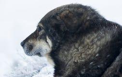 De verdwaalde hondwinter in de sneeuw De sneeuw valt Stock Fotografie
