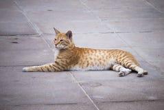 De verdwaalde Kat ontspant in Abu Dhabi Royalty-vrije Stock Afbeeldingen
