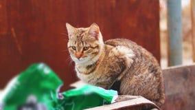 De verdwaalde kat op een huisvuilbak in de stad gaat weg stock videobeelden