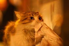 2019 de Verdwaalde nieuwe foto van Cat Photographer, leuke straatkatten in de nacht stock foto