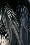 De veren van Anhinga stock foto's