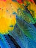 De veren van de papegaai Royalty-vrije Stock Foto's