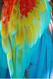 De veren van de papegaai Stock Afbeelding