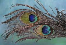 De veren van de pauw royalty-vrije stock afbeelding