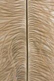 Struisvogelveren stock fotografie