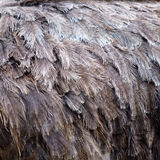 De veren van de textuur royalty-vrije stock foto