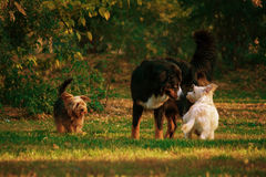 De vergadering van de hond Stock Foto's