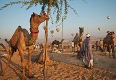 De verhalen van de woestijn bij markt Pushkar Stock Foto's