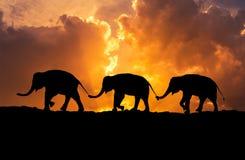 De verhouding van silhouetolifanten met de familiestaart die van de boomstamgreep samen op zonsondergang lopen stock illustratie