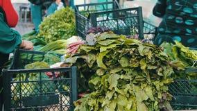 De verkoper in de markt verkoopt greens aan koper Een vrouw koopt verse groenten op de markt stock footage