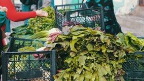 De verkoper in de markt verkoopt greens aan koper Een vrouw koopt verse groenten op de markt stock video