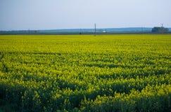 De verkrachtingsgebied van het land met blauwe hemel Stock Foto