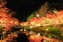 De verlichting in Nabana geen Sato, Mie, Japan, met de aantrekkelijke herfst gaat weg Stock Foto's