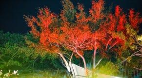 De verlichting op de vage boom - en lawaai blackground stock afbeeldingen