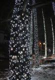 De verlichting van het nieuwjaar op de boom in het park van Donau, Novi Sad, Servië royalty-vrije stock afbeeldingen
