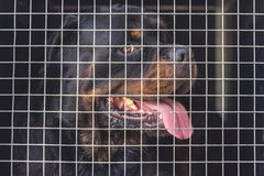 De verloren hond zit in een kooi achter een rooster in verwachting van de nieuwe eigenaar Schuilplaats voor verdwaalde honden stock fotografie