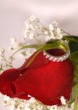 De verlovingsring op een rood nam toe Stock Afbeeldingen