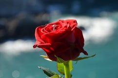 De verlovingsring op een rood nam toe stock fotografie