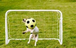De vermakelijke bewaarder bewaart doel die de bal van het voetbalvoetbal vangen Royalty-vrije Stock Foto's
