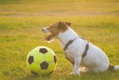 De vermoeide hond met een bal zit bij hoogte na voetbalwedstrijd Royalty-vrije Stock Foto's
