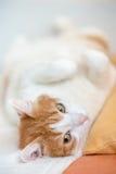 De vermoeide rust van de gemberkat op bed met brede geknepen ogen stock afbeeldingen