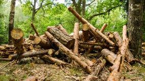 De vernietiging van brandhoutbomen Bos in de tussentijd van tijd brandhout Geschoten op Canon 5D Mark II met Eerste l-Lenzen 11 stock footage