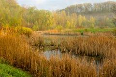 De Vernieuwing van het moerasland Stock Afbeelding