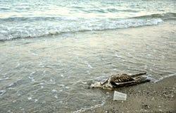 De verontreinigde kust van de Zwarte Zee in Roemenië Royalty-vrije Stock Foto