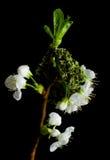 De verrassing van de lente Stock Foto's