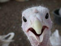 De Verrassing van het vogeltje Royalty-vrije Stock Fotografie